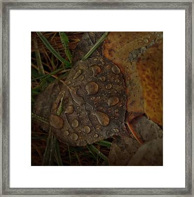 Dew To Age  Framed Print
