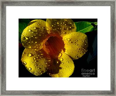 Dew Trumpet Framed Print by Greg Patzer