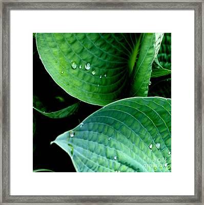 Dew Framed Print by Valerie Fuqua