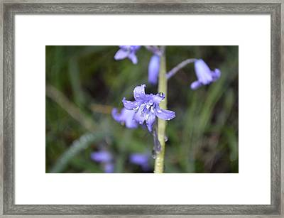 Dew You Love It? Framed Print by Sheldon Blackwell