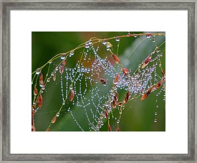 Framed Print featuring the photograph Dewdrop Inn by Dianne Cowen