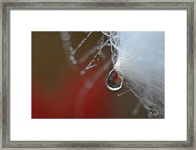 Dewdrop Lily On Milkweed Silk Framed Print