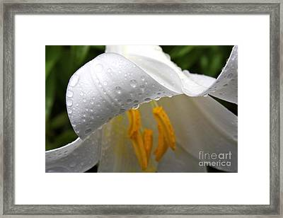 Framed Print featuring the photograph Dewdrops On Lilly  by Jay Nodianos