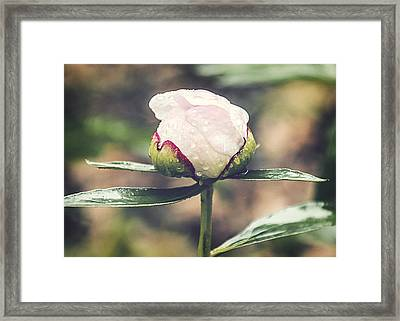 Dewy Bloom Framed Print