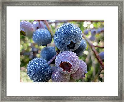 Dewy Blueberries Framed Print