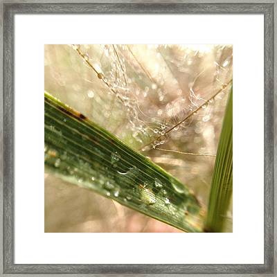 Framed Print featuring the photograph Dewy Dandelions by Nikki McInnes