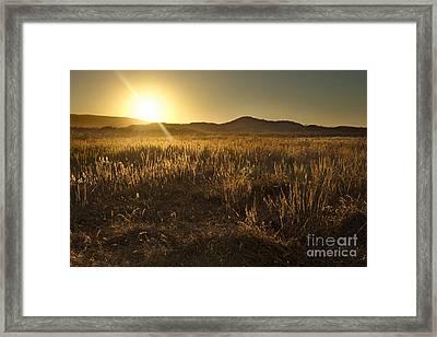 Dewy Desert Framed Print by Matt Tilghman