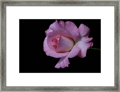 Framed Print featuring the photograph Dewy by Doug Norkum