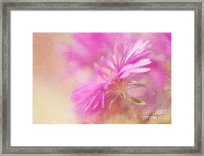 Dewy Pink Asters Framed Print