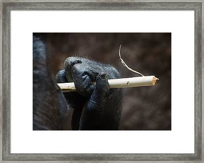 Dexterity Framed Print by Rebecca Sherman