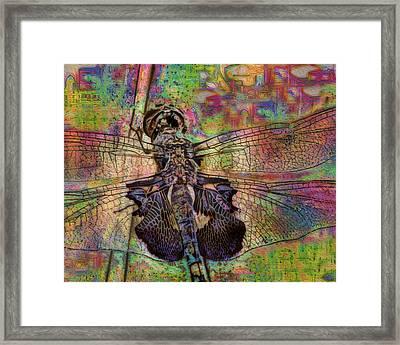 Dfly Framed Print by Jack Zulli