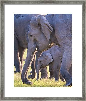 Dhikala Elephants Framed Print