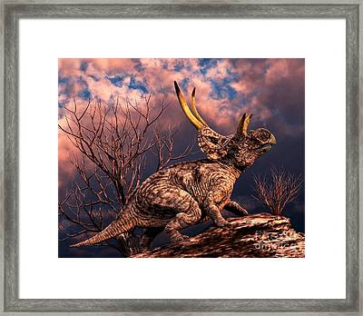Diabloceratops Was A Ceratopsian Framed Print by Philip Brownlow
