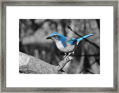Dial Blue Framed Print