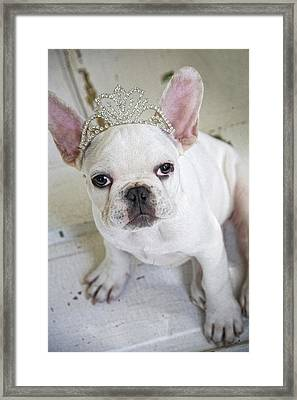 Diamond Diva Framed Print by Lisa Jane