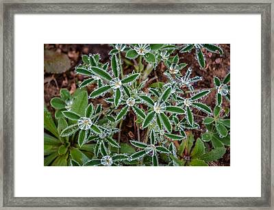 Diamond Flowers Framed Print by Kelly Kitchens