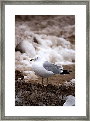 Diamond In The Rough  Framed Print by Penny Hunt
