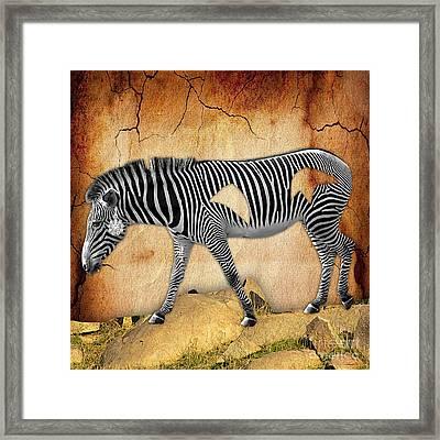Diamond In The Rough Zebra. Spot The Diamond. Framed Print