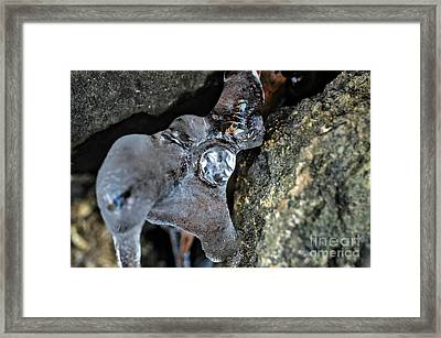 Diamond In The Ruff Ice Framed Print by Peggy Franz