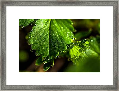 Diamond Necklace 1. Small Natural Wonders Framed Print by Jenny Rainbow