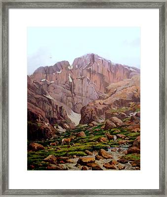 Diamond Sheep Framed Print by W  Scott Fenton