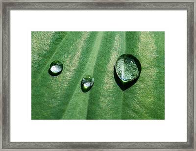 Diamonds Are Forever - Featured 3 Framed Print by Alexander Senin
