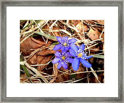 Diamonds Framed Print by Lucy D