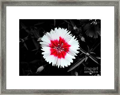 Dianthus Red And White Flower Decor Macro Color Splash Watercolor Digital Art Framed Print