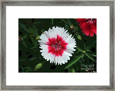 Dianthus Red And White Flower Decor Macro Cutout Digital Art Framed Print