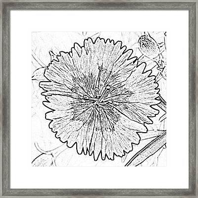 Dianthus Red And White Flower Decor Macro Square Format Black And White Digital Art Framed Print