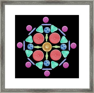 Diatoms And Radiolaria Framed Print by Steve Gschmeissner