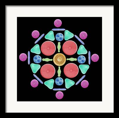Radiolaria Framed Prints