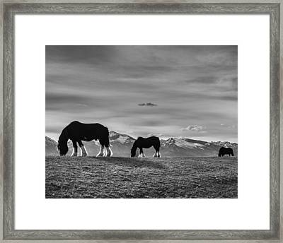 Dick's Horses Framed Print by Dianne Arrigoni