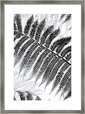 Dicksonia Antarctica Tree Fern Monochrome Framed Print by Tim Gainey