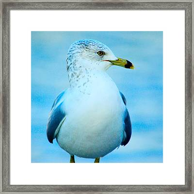 Did I Fly South Framed Print