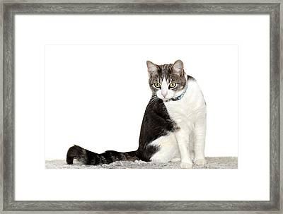 Did I Hear A Mouse Framed Print by Susan Leggett