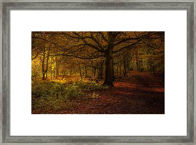 Did Someone Say Autumn? Framed Print by Chris Fletcher