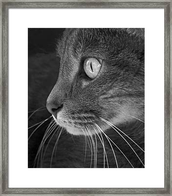 Did Someone Say Mouse Framed Print