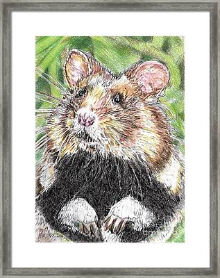 Did Someone Say Nuts Framed Print by J McCombie