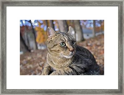 Did You Hear That Framed Print by Susan Leggett