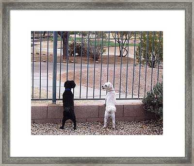Did You See That? Framed Print by Sheila Byers