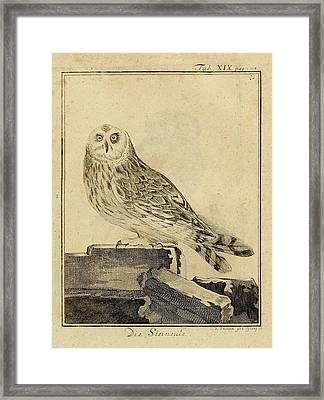 Die Stein Eule Or Church Owl Framed Print