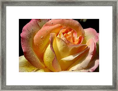 Different Hues Framed Print by Marie Neder
