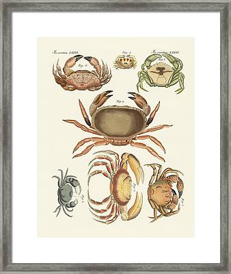 Different Kinds Of Crabs Framed Print