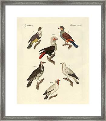 Different Kinds Of Foreign Pigeons Framed Print