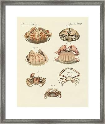 Different Kinds Of Shrimps And Crabs Framed Print