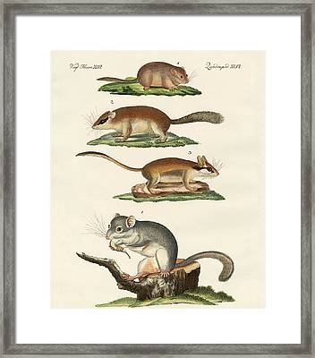 Different Kinds Of Sleepers Framed Print by Splendid Art Prints