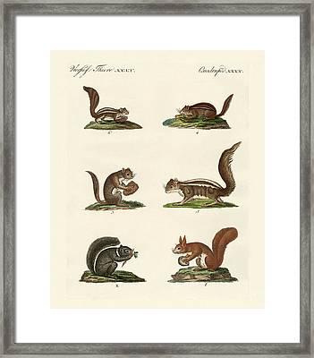 Different Kinds Of Squirrels Framed Print by Splendid Art Prints