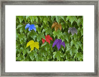 Different Yet The Same Framed Print