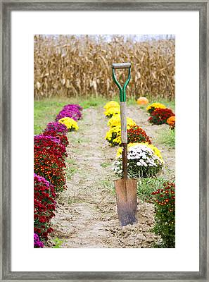 Dig Your Own Framed Print by Alexey Stiop